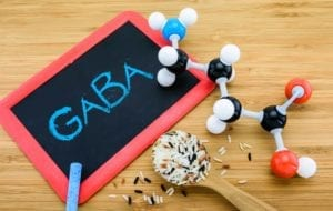GABA molecule is important neurotransmitter  in the mammalian central nervous system