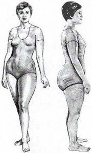 body type illustration